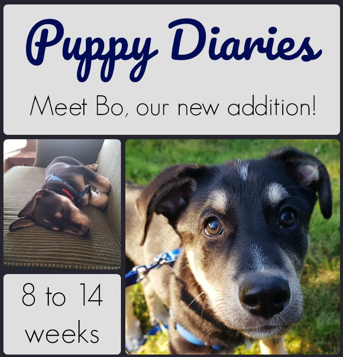 Puppy Diaries #1 – Meet Bo, Our New Addition