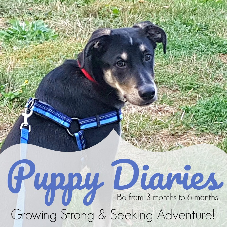 Puppy Diaries #2 – The Many Adventures Of Our Young Pup!